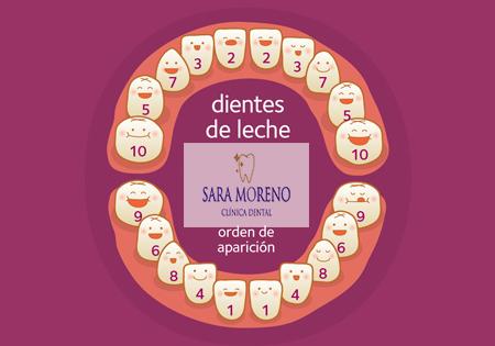 Aparición dientes de leche Almendralejo